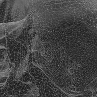 2D photogrammetry of a skull